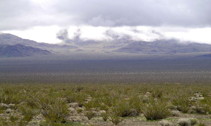 A flat desert floor covered with small shrubby plants stretchs out and rise up to mountains on the horizon.